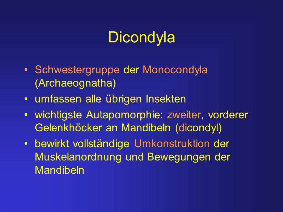 Dicondyla Schwestergruppe der Monocondyla (Archaeognatha)