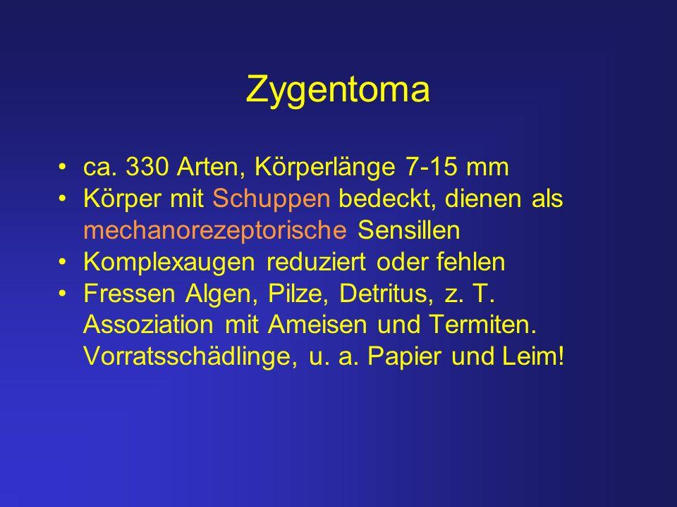 Zygentoma ca. 330 Arten, Körperlänge 7-15 mm