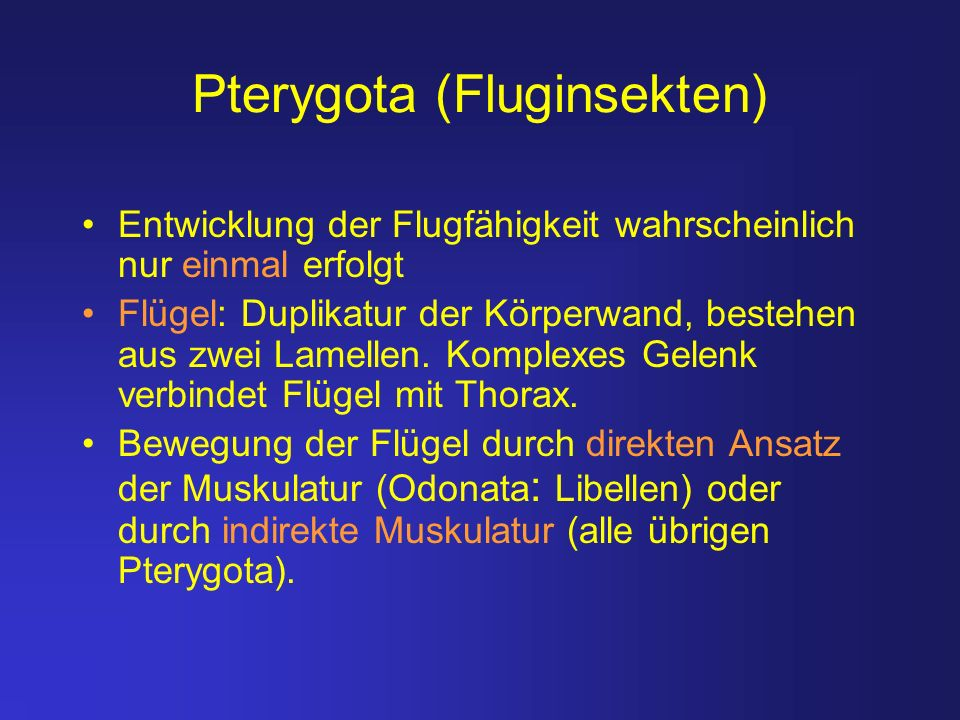 Pterygota (Fluginsekten)
