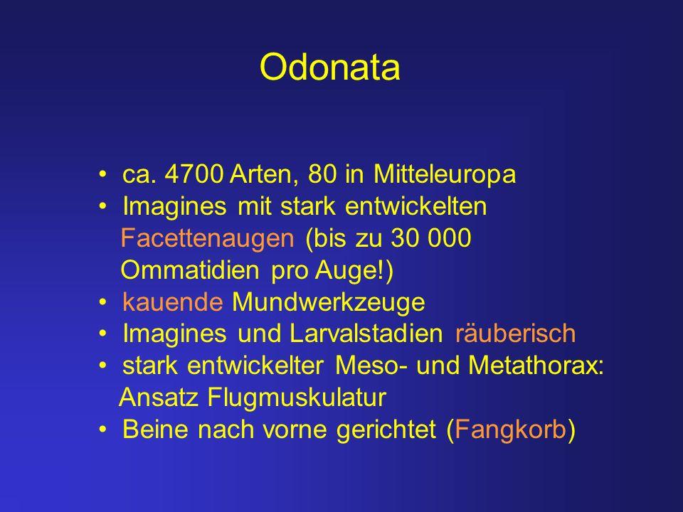 Odonata ca. 4700 Arten, 80 in Mitteleuropa