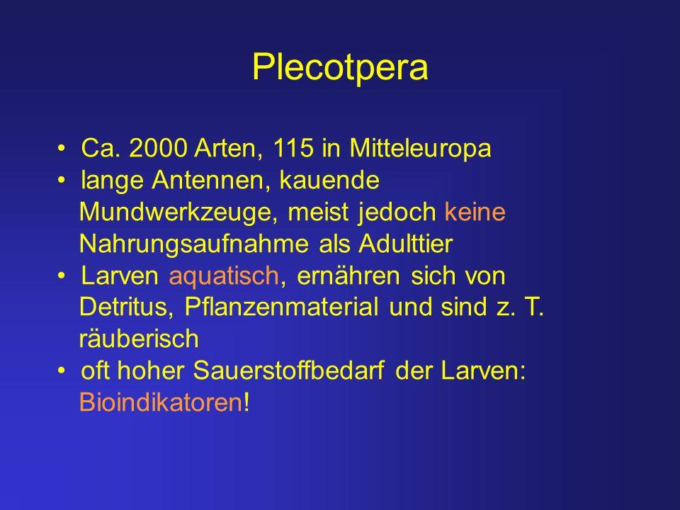 Plecotpera Ca. 2000 Arten, 115 in Mitteleuropa lange Antennen, kauende