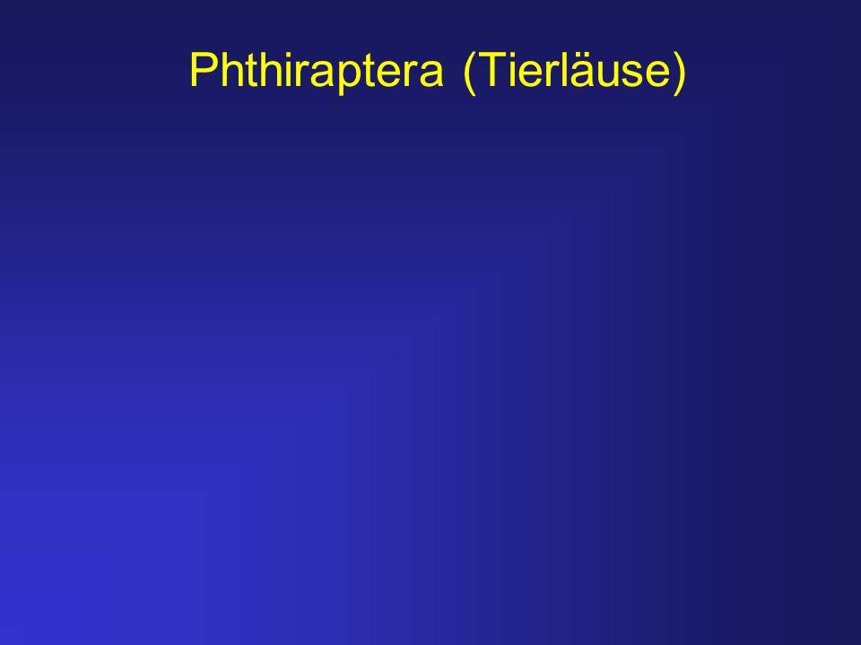 Phthiraptera (Tierläuse)
