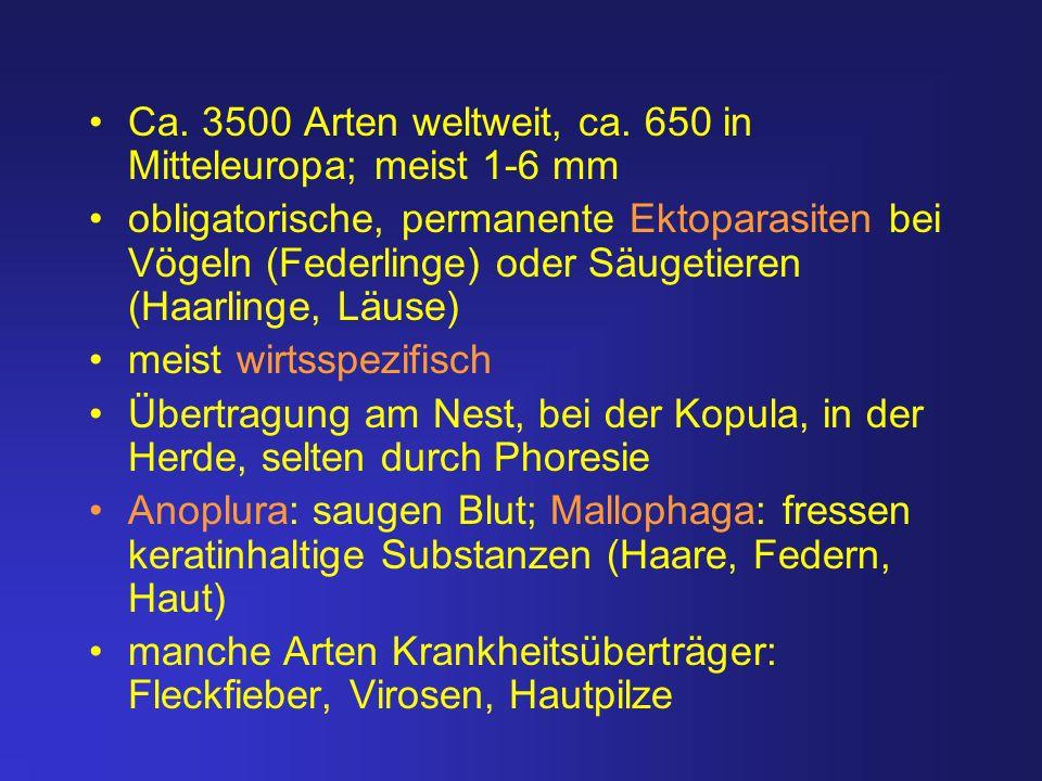 Ca. 3500 Arten weltweit, ca. 650 in Mitteleuropa; meist 1-6 mm
