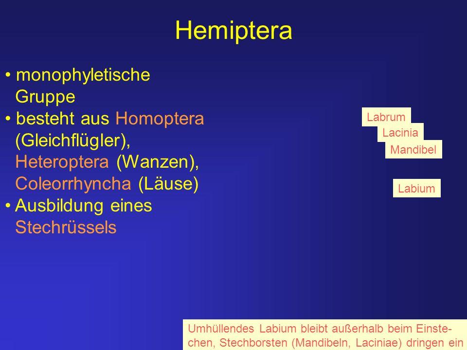Hemiptera monophyletische Gruppe besteht aus Homoptera