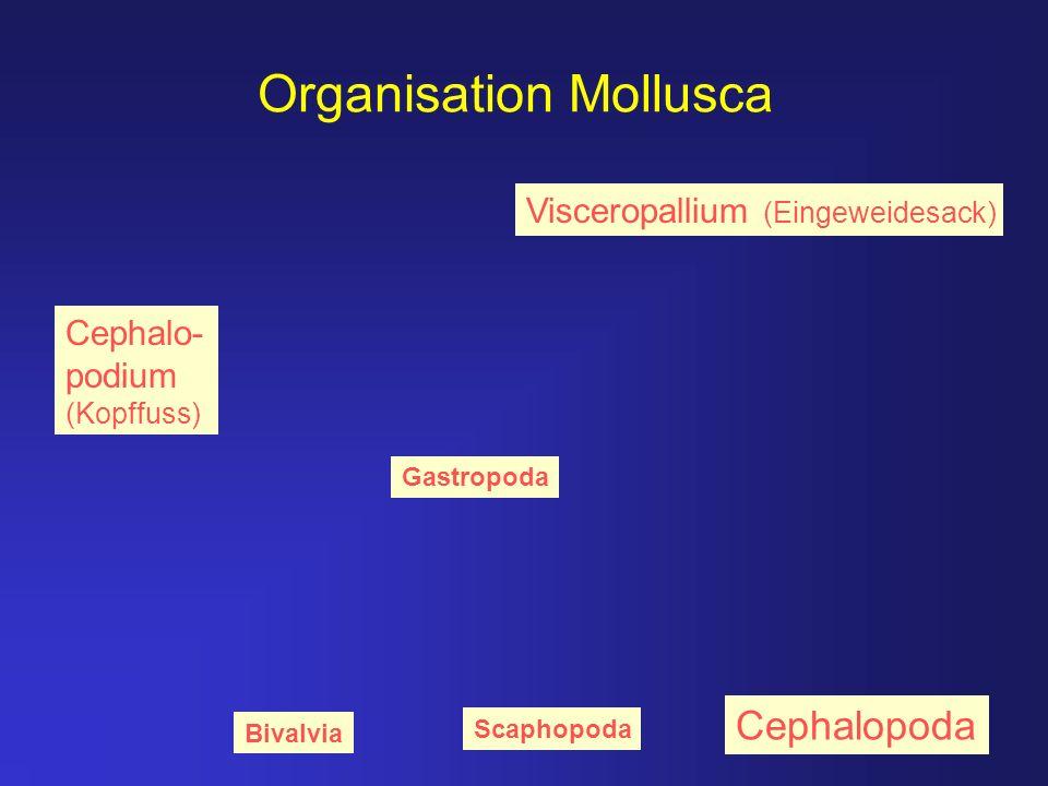 Organisation Mollusca