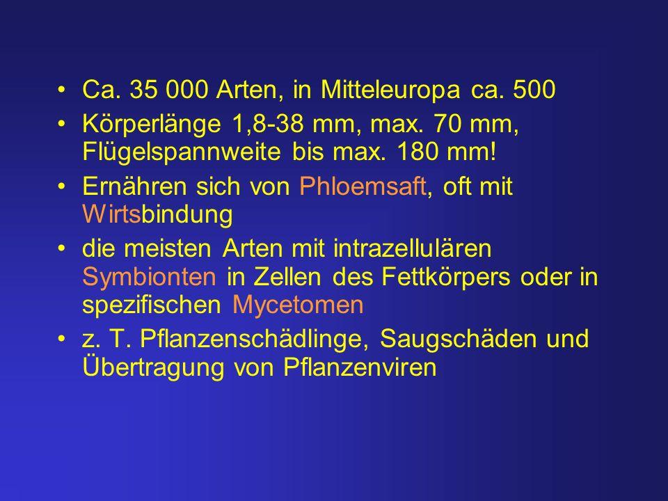 Ca. 35 000 Arten, in Mitteleuropa ca. 500