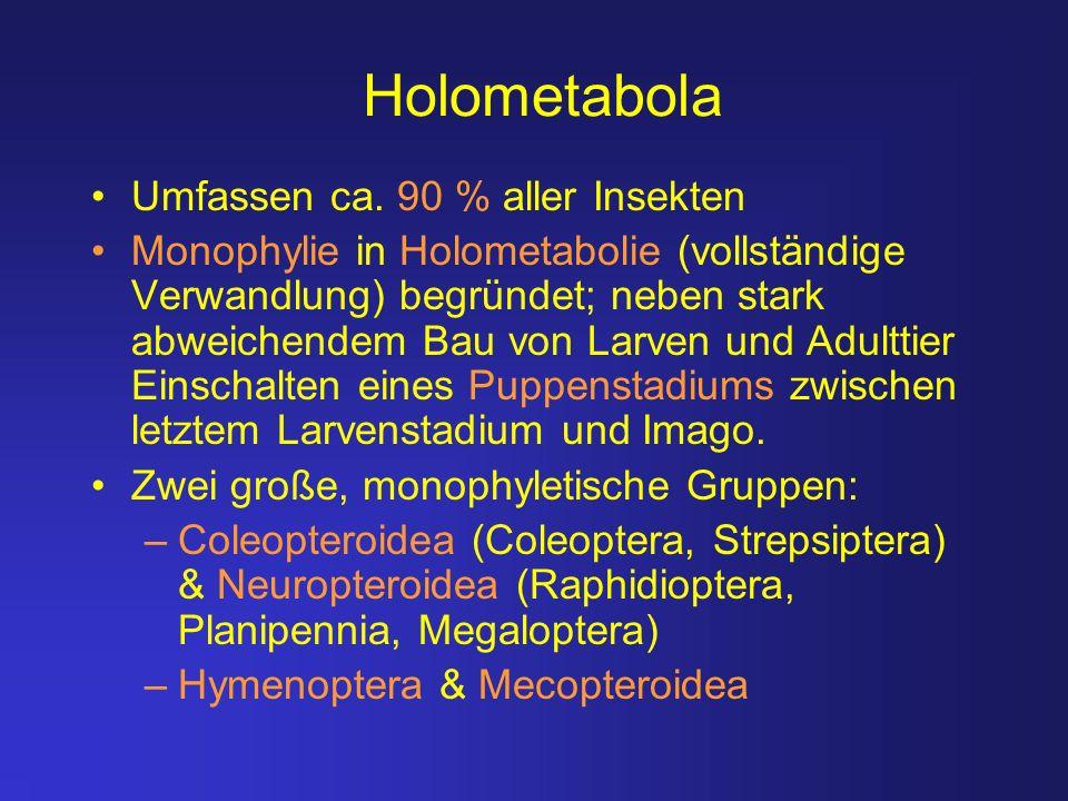 Holometabola Umfassen ca. 90 % aller Insekten
