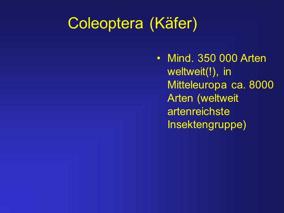 Coleoptera (Käfer) Mind. 350 000 Arten weltweit(!), in Mitteleuropa ca.