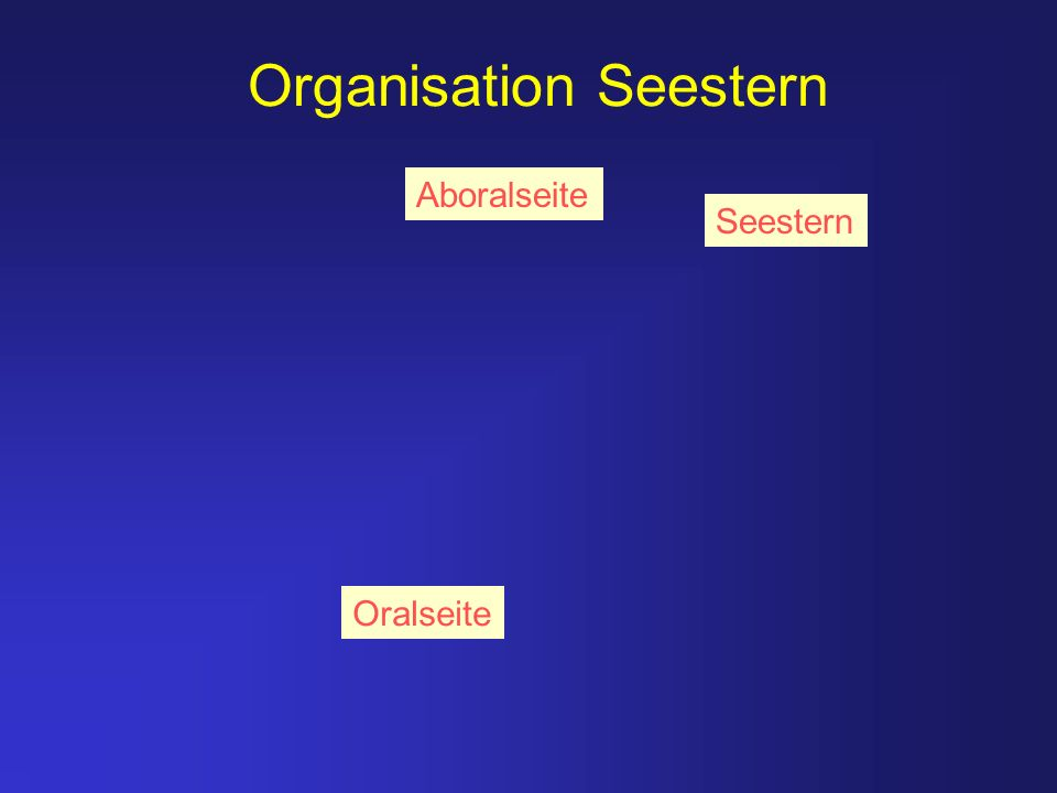Organisation Seestern