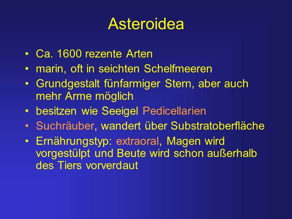 Asteroidea Ca. 1600 rezente Arten marin, oft in seichten Schelfmeeren