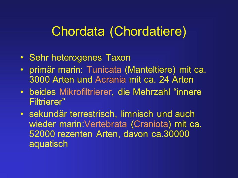 Chordata (Chordatiere)