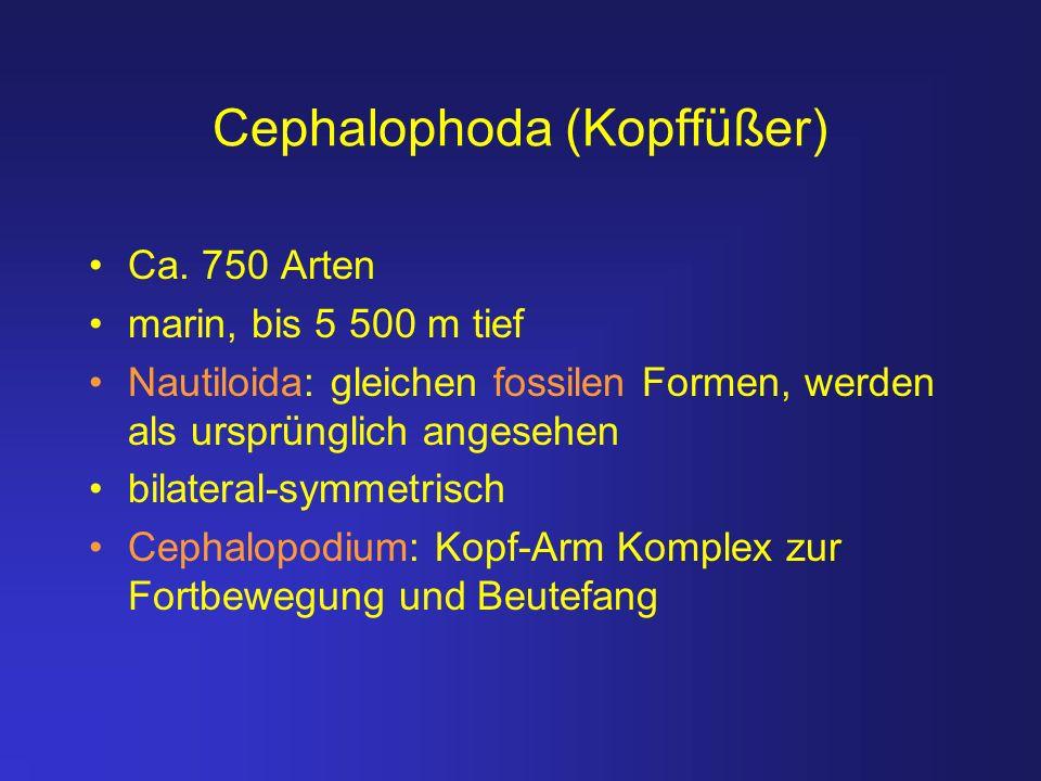 Cephalophoda (Kopffüßer)