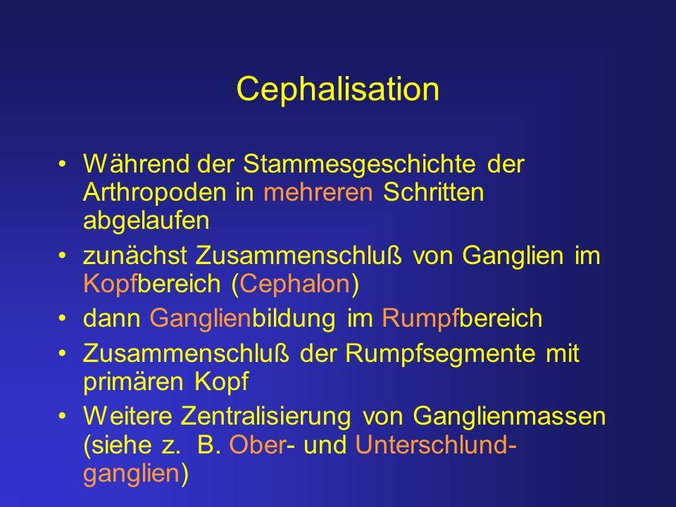 Cephalisation Während der Stammesgeschichte der Arthropoden in mehreren Schritten abgelaufen.