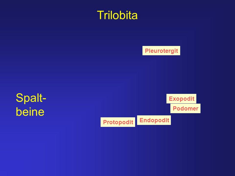 Trilobita Spalt- beine Pleurotergit Exopodit Podomer Endopodit