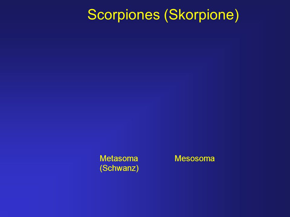 Scorpiones (Skorpione)