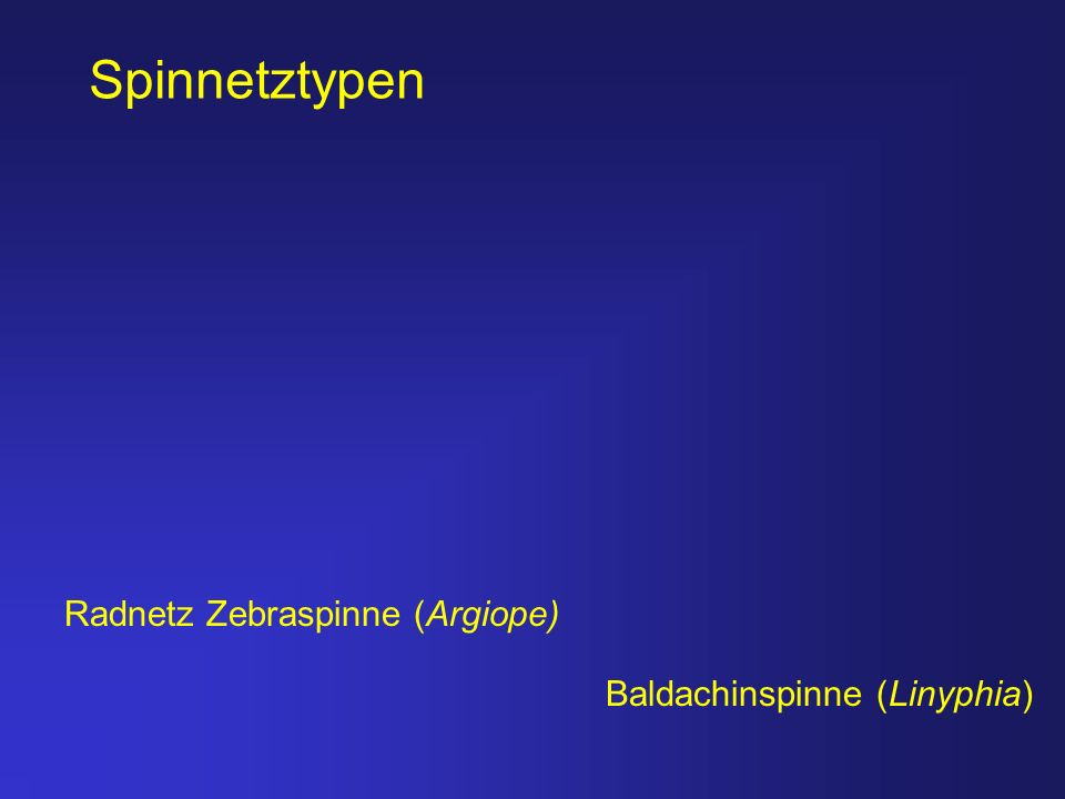 Spinnetztypen Radnetz Zebraspinne (Argiope) Baldachinspinne (Linyphia)