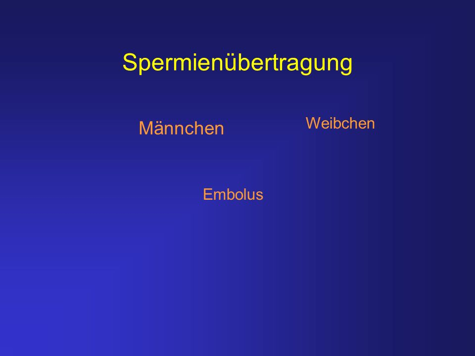 Spermienübertragung Weibchen Männchen Embolus