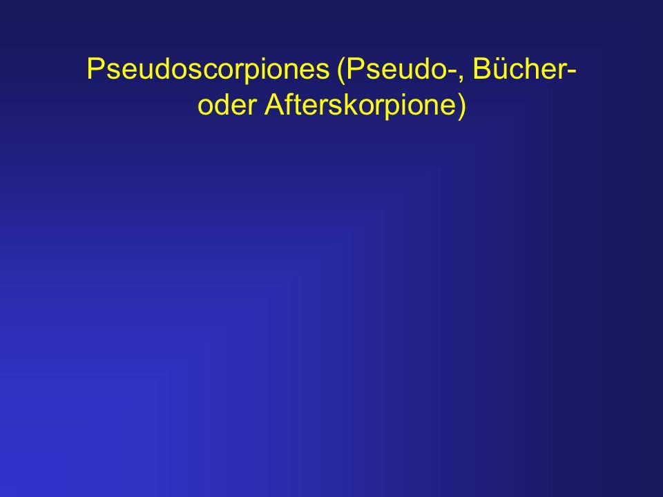 Pseudoscorpiones (Pseudo-, Bücher- oder Afterskorpione)