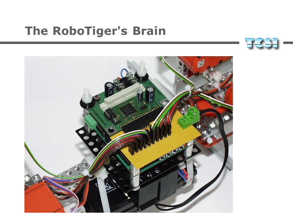 The RoboTiger s Brain