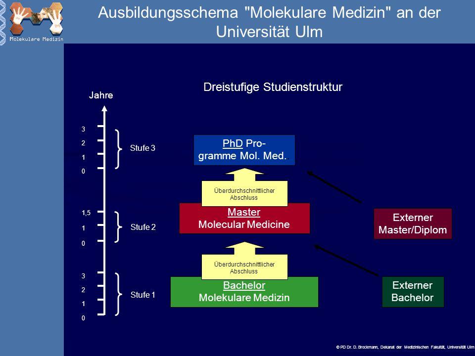 Ausbildungsschema Molekulare Medizin an der Universität Ulm