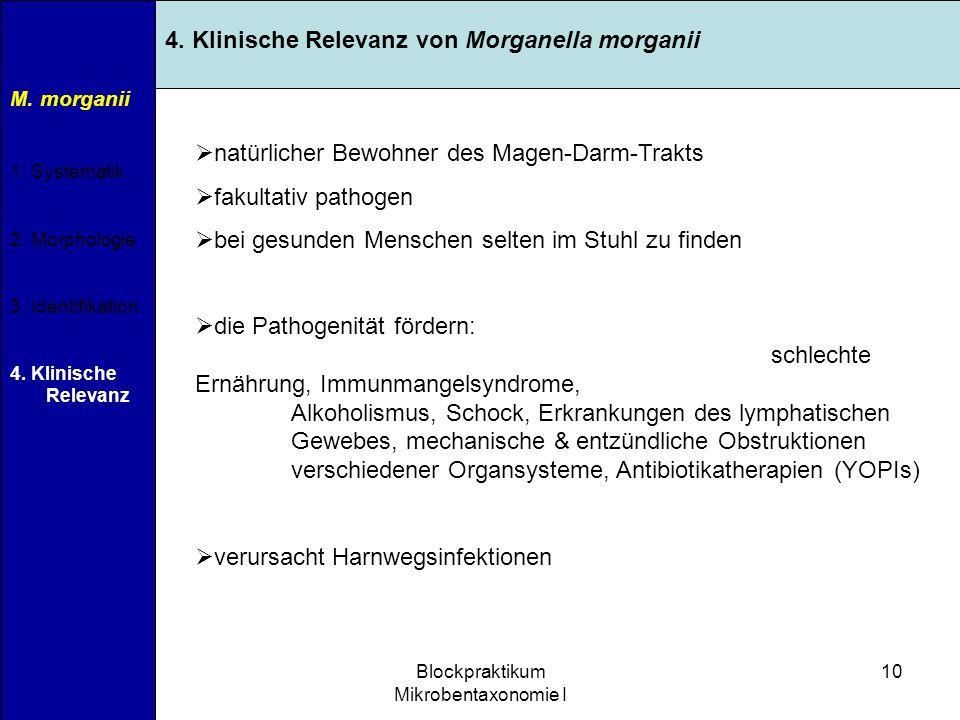 Blockpraktikum Mikrobentaxonomie I