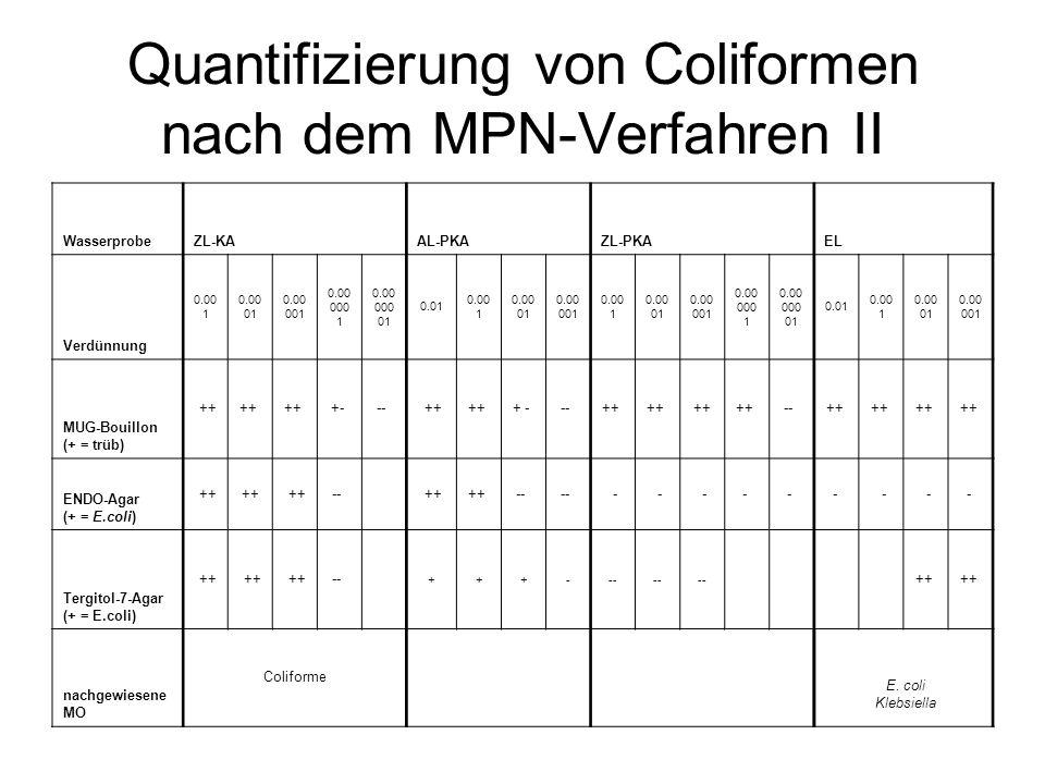 Quantifizierung von Coliformen nach dem MPN-Verfahren II