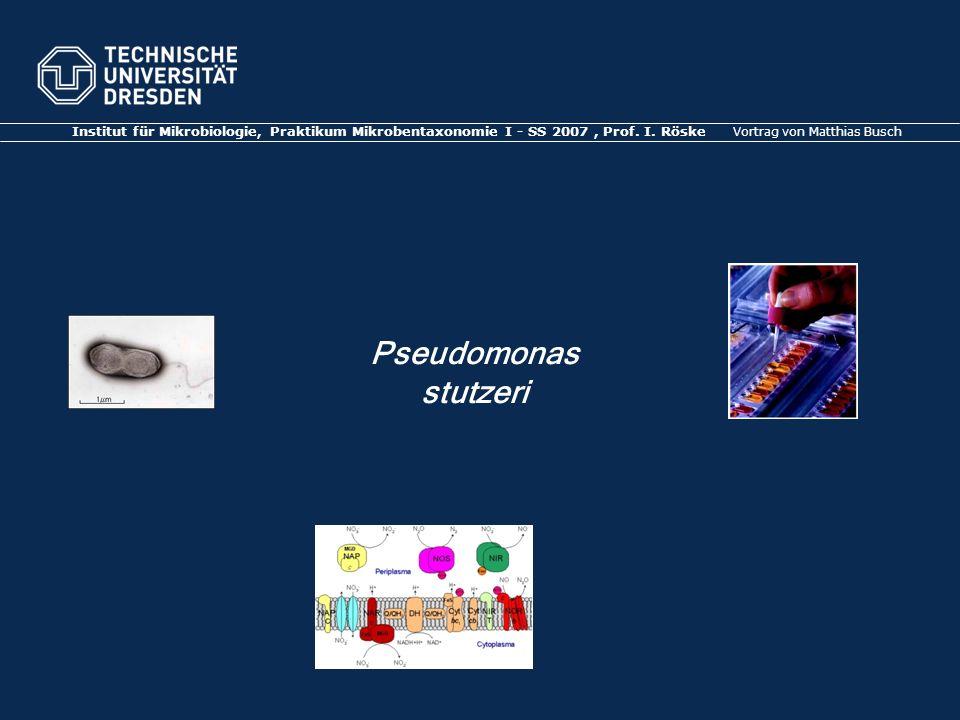 Institut für Mikrobiologie, Praktikum Mikrobentaxonomie I - SS 2007 , Prof. I. Röske Vortrag von Matthias Busch