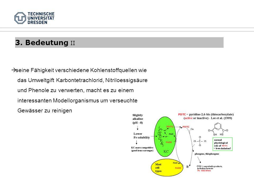 3. Bedeutung II seine Fähigkeit verschiedene Kohlenstoffquellen wie