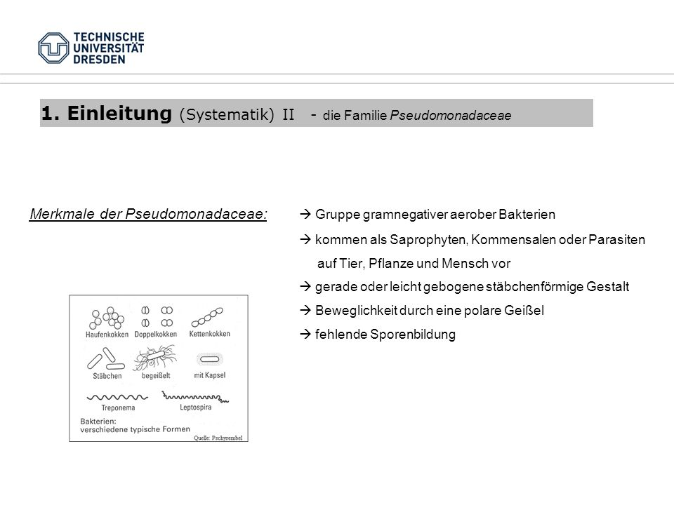 1. Einleitung (Systematik) II - die Familie Pseudomonadaceae