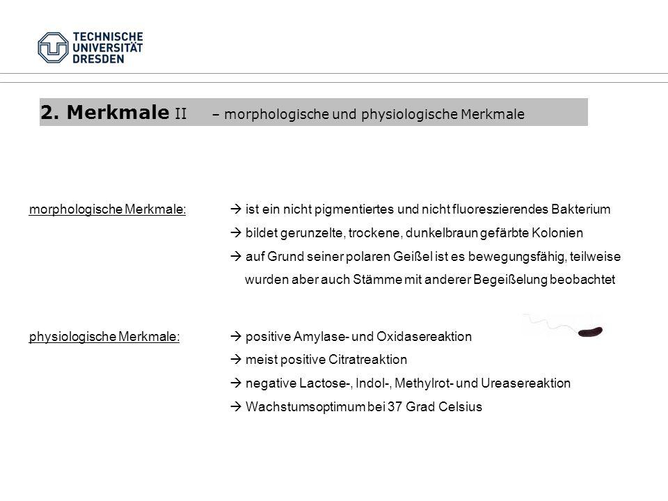 2. Merkmale II – morphologische und physiologische Merkmale