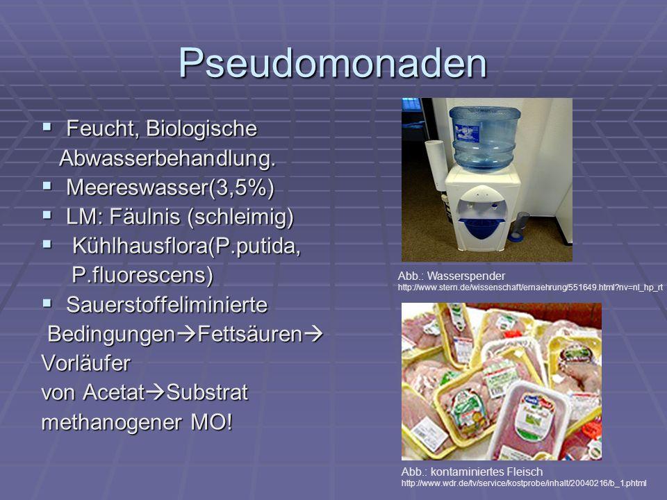 Pseudomonaden Feucht, Biologische Abwasserbehandlung.