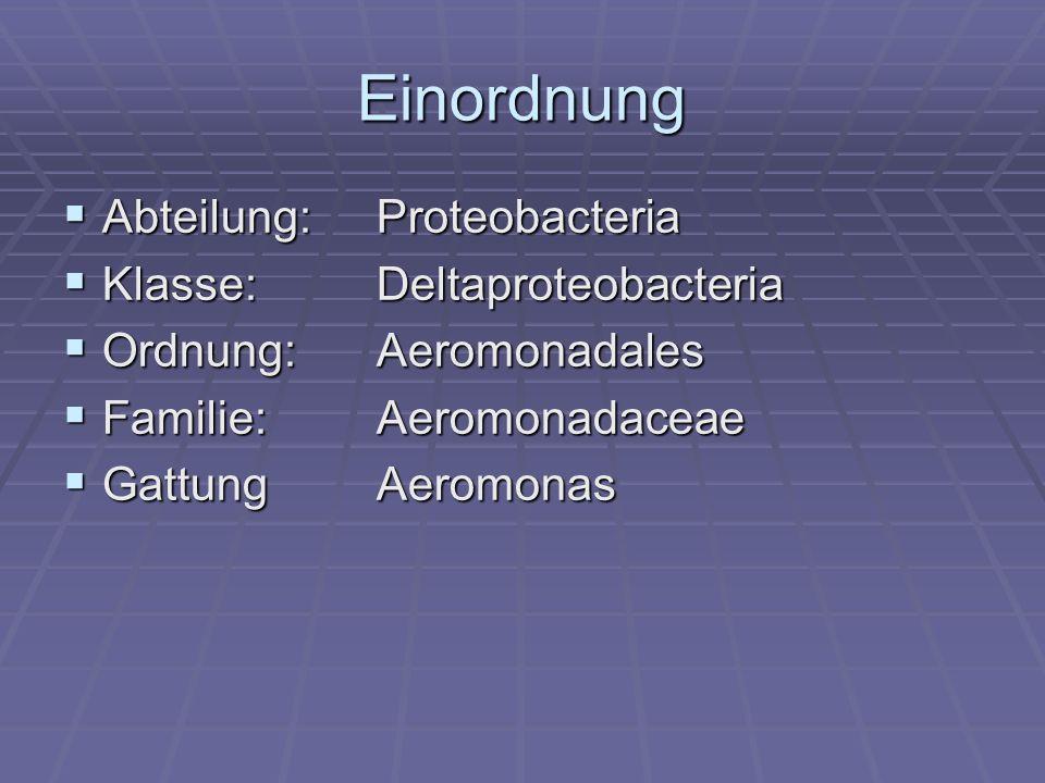 Einordnung Abteilung: Proteobacteria Klasse: Deltaproteobacteria