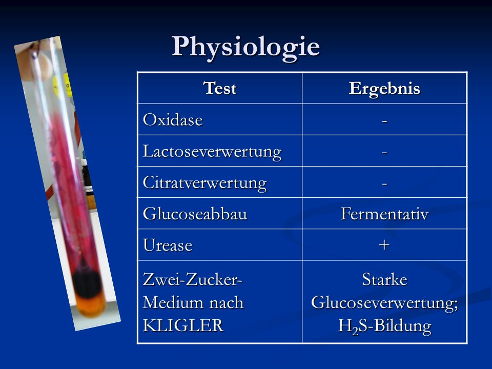 Starke Glucoseverwertung; H2S-Bildung