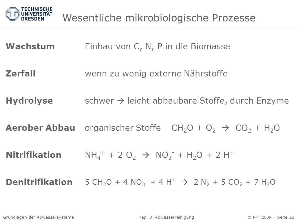 Wesentliche mikrobiologische Prozesse