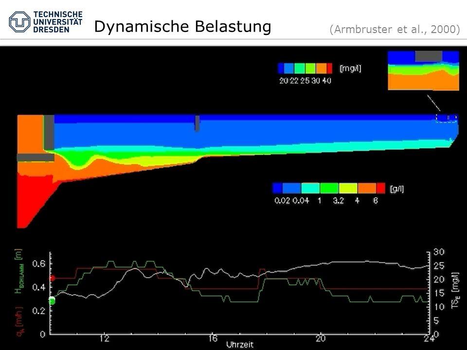 Dynamische Belastung (Armbruster et al., 2000)