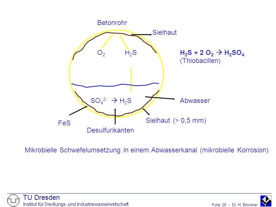 Betonrohr Sielhaut. O2 H2S H2S + 2 O2  H2SO4 (Thiobacillen) SO42-  H2S Abwasser. Sielhaut (> 0,5 mm)