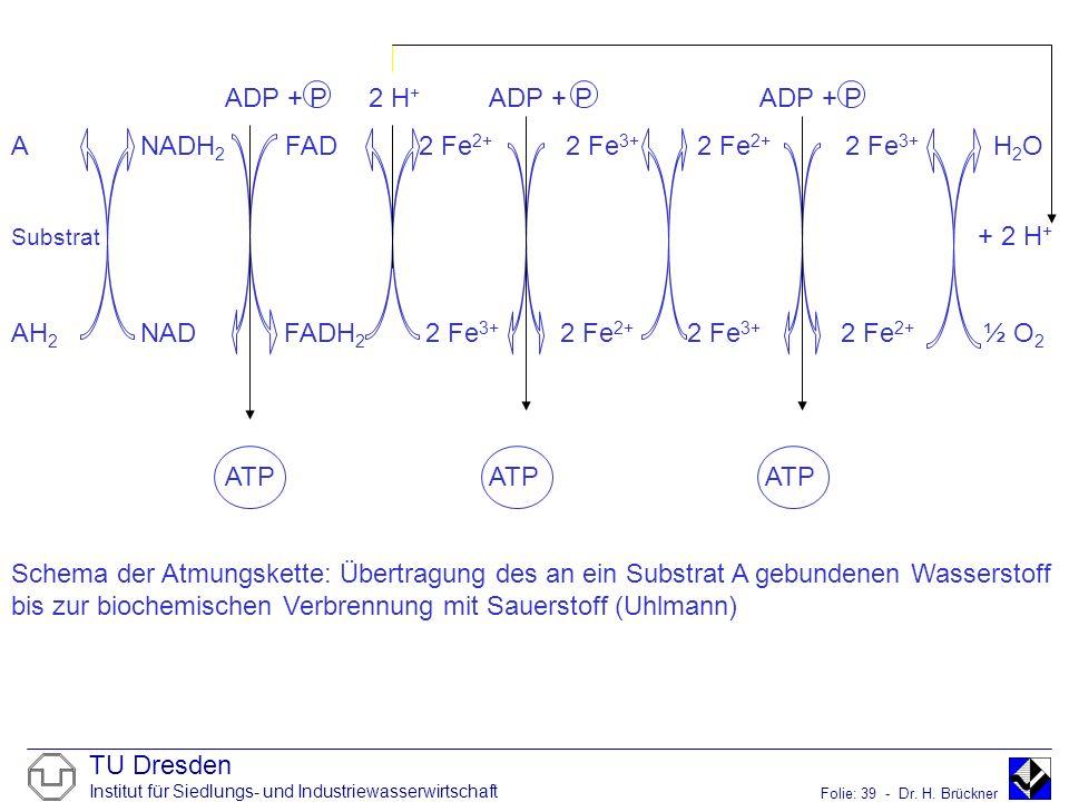 A NADH2 FAD 2 Fe2+ 2 Fe3+ 2 Fe2+ 2 Fe3+ H2O
