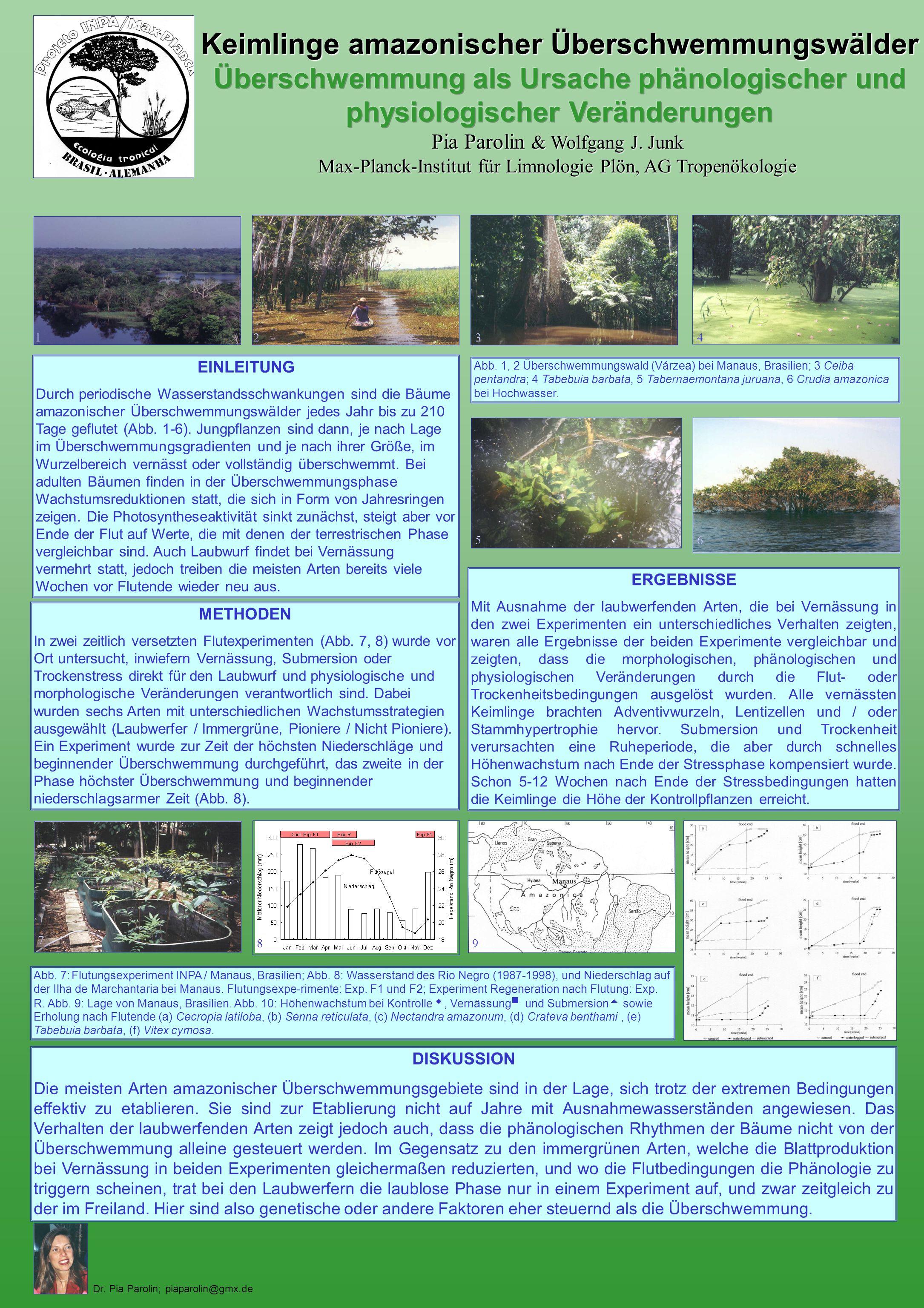 Keimlinge amazonischer Überschwemmungswälder