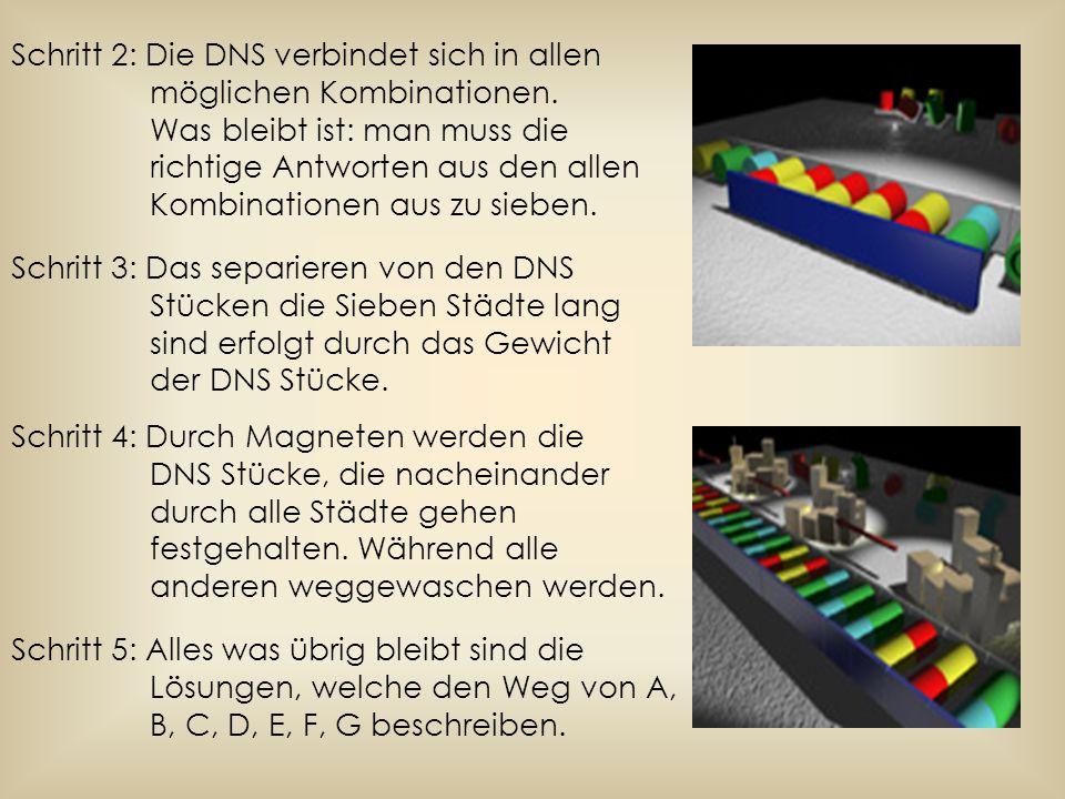 Schritt 2: Die DNS verbindet sich in allen