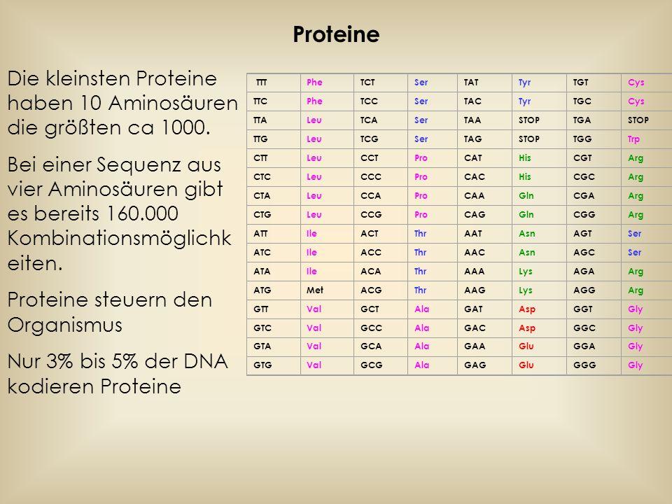 Proteine Die kleinsten Proteine haben 10 Aminosäuren die größten ca 1000.