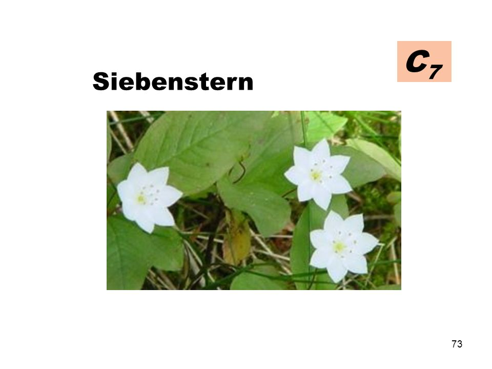 C7 Siebenstern
