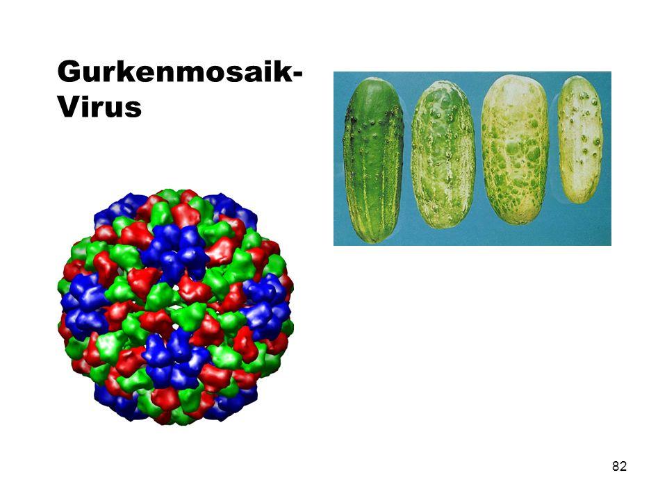 Gurkenmosaik-Virus