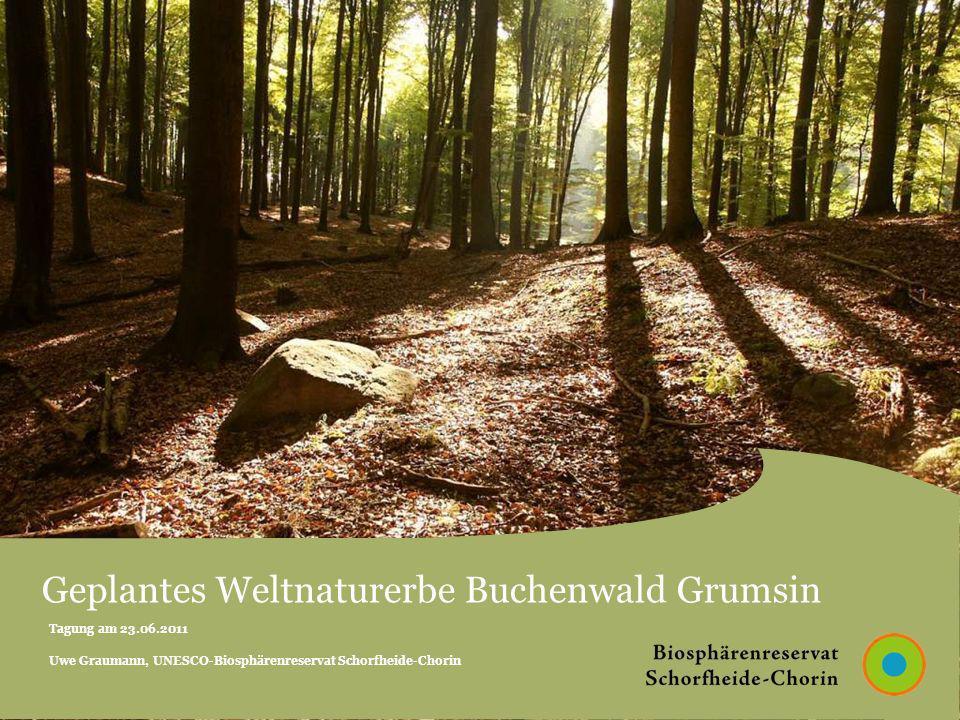 Geplantes Weltnaturerbe Buchenwald Grumsin