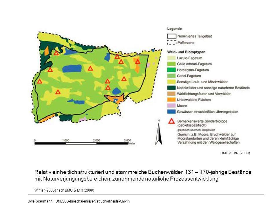 BMU & BfN (2009) Relativ einheitlich strukturiert und stammreiche Buchenwälder, 131 – 170-jährige Bestände.