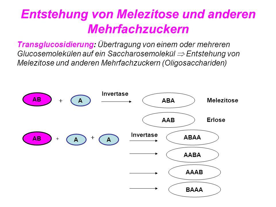 Entstehung von Melezitose und anderen Mehrfachzuckern