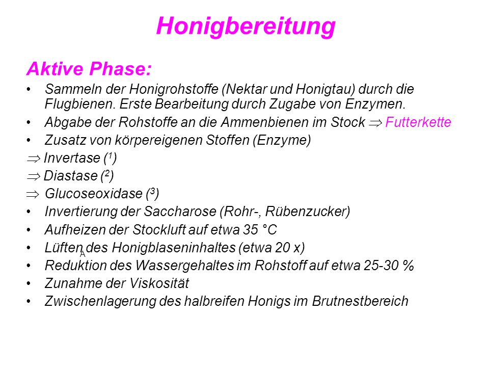 Honigbereitung Aktive Phase: