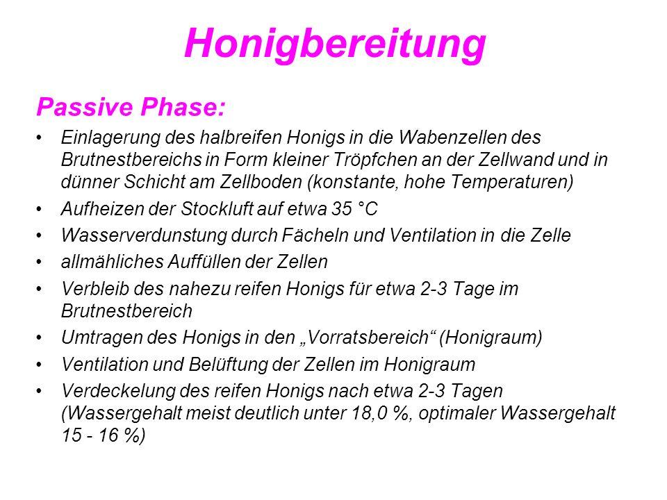 Honigbereitung Passive Phase: