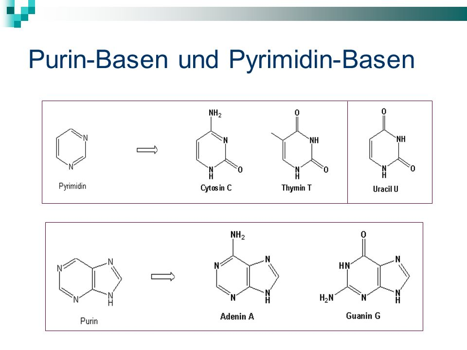 Purin-Basen und Pyrimidin-Basen