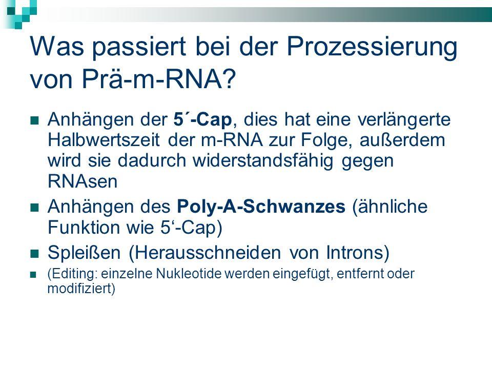 Was passiert bei der Prozessierung von Prä-m-RNA