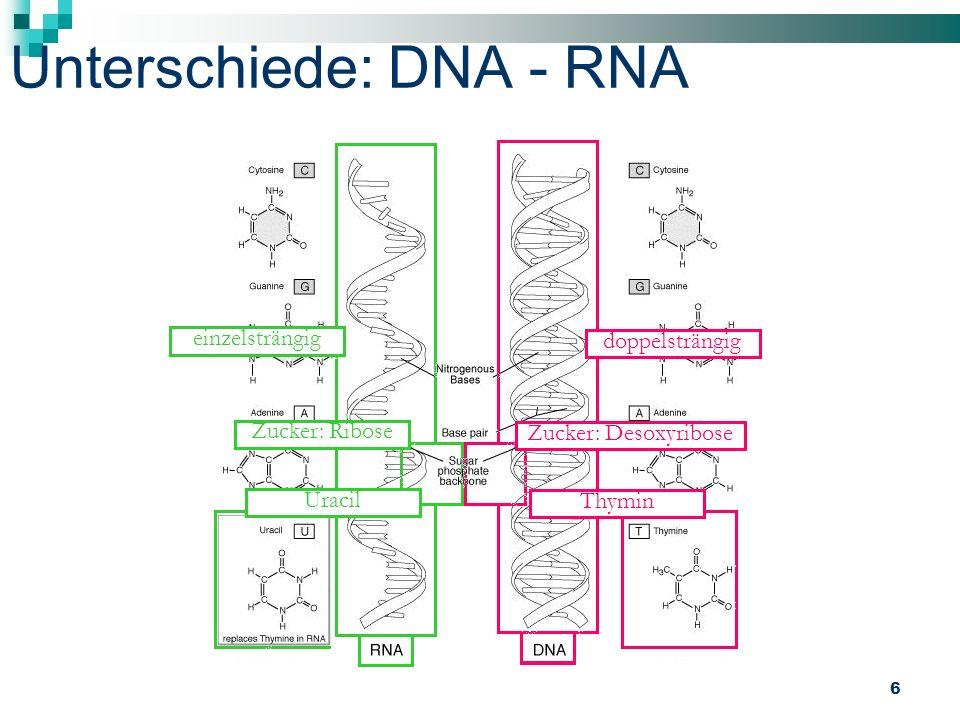 Unterschiede: DNA - RNA